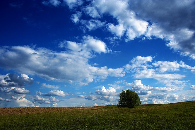 fot. plfoto.com
