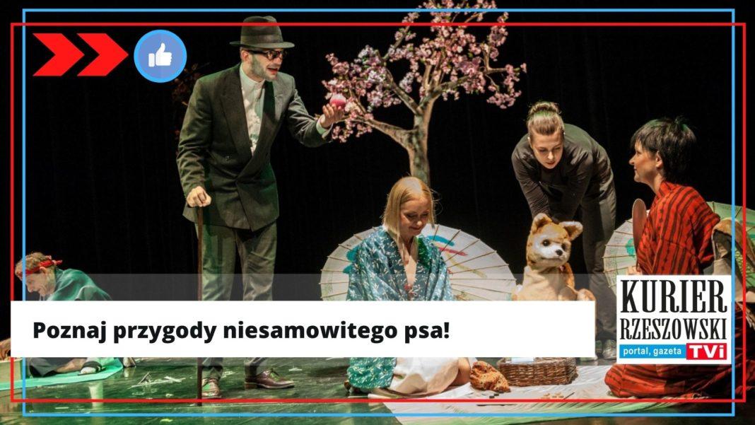 źródło: http://www.teatrmaska.pl/spektakle/dzieci/hachiko,spektakl604/